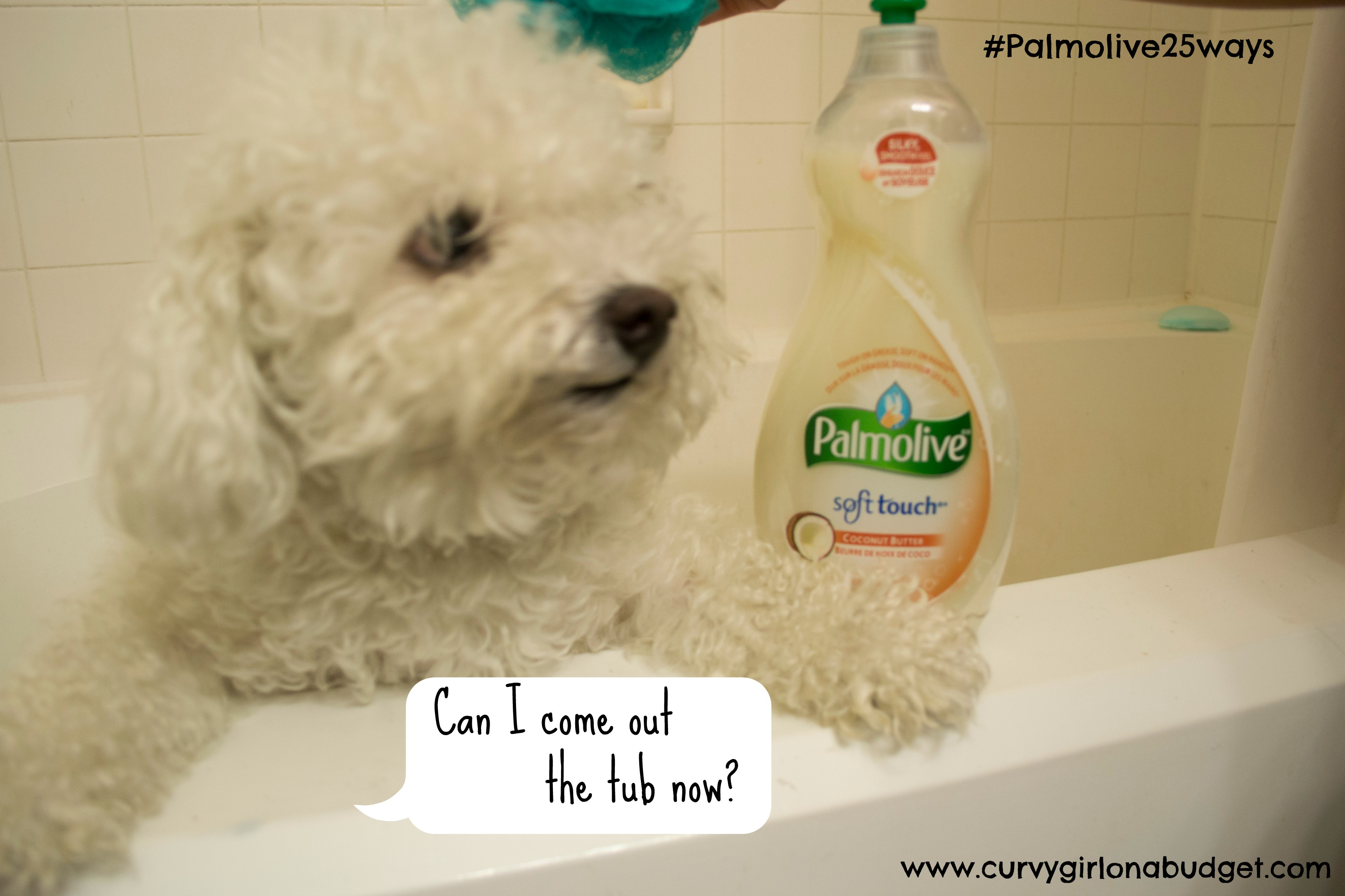 Can I Wash My Dog With Palmolive